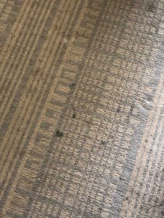 Holiday Inn Express St. Louis Central West End: Again, typical of the property. Stains on an old carpet.