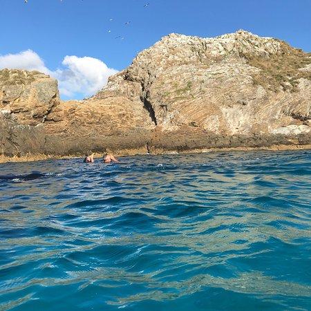 Sea turtle snorkel tours byron bay dive centre - Dive byron bay ...