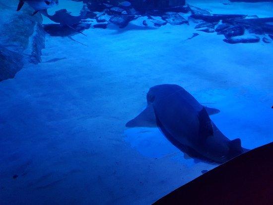 SEA LIFE London Aquarium : 20180517_161650_large.jpg