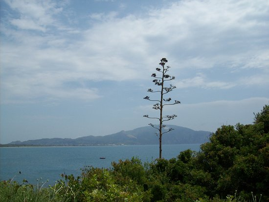 the view from cameo island