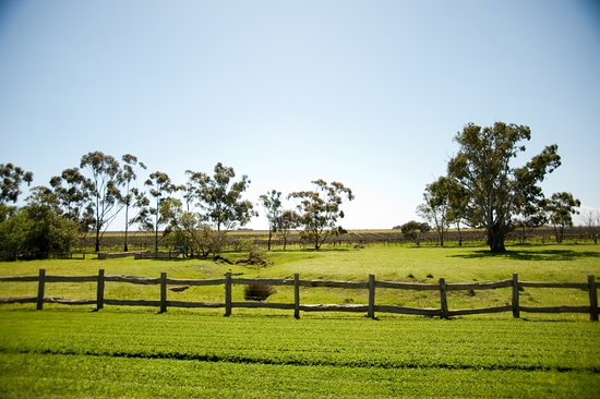 Penny's Hill: Vineyard views