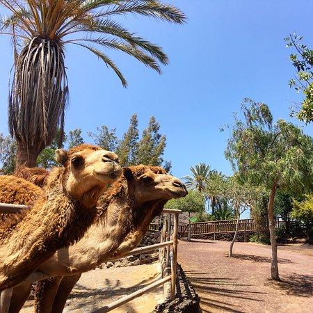 Oasis Park Fuerteventura Φωτογραφία