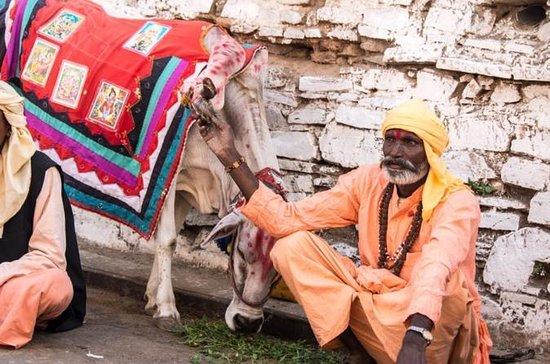 6 Dagen Delhi Agra Jaipur &amp ...