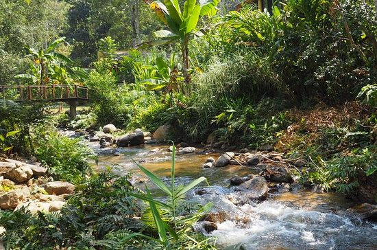 Full Day Mae Kam Pong and Hot Springs from Chiang Mai