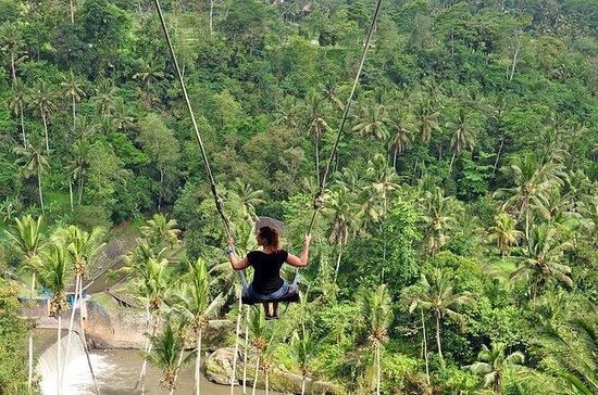 Tour de Ubud con Jungle Swing