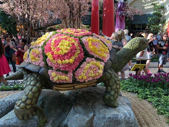 Bellagio Conservatory & Botanical Garden: Prettiest tortoise I've ever seen.