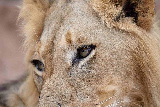 Ulusaba Private Game Reserve-billede