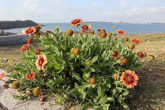 Serpent Head Mountain: 蛇頭山上路旁的花