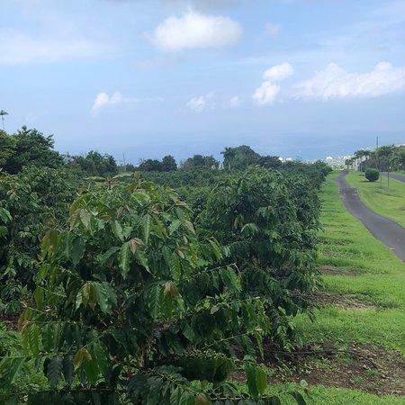 ホルアロア, ハワイ, photo8.jpg