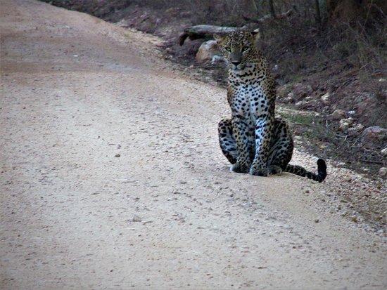 Sri Wild Yala Safari: leopard