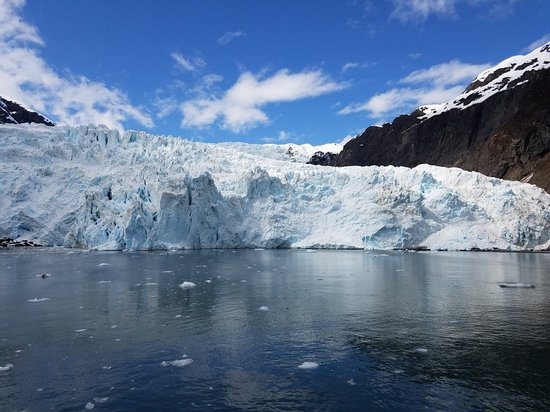 Major Marine Tours - Kenai Fjords Cruise: We saw 4 transient orcas that hung around the boat!! Holgate glacier falling into the water seve