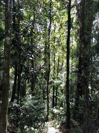 Eungella National Park: Sky Windo Lookout