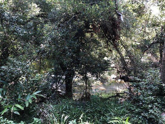 Eungella National Park: Broken River
