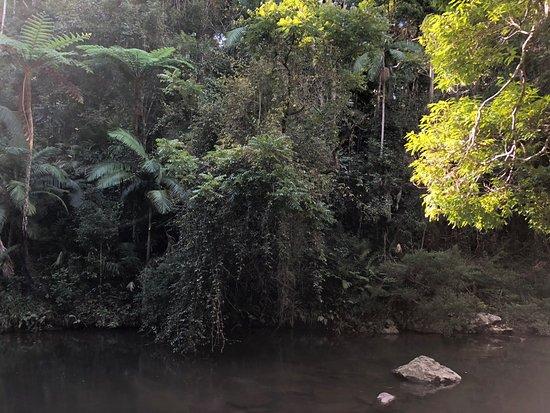 Eungella National Park照片