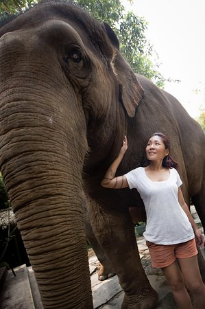 Four Seasons Tented Camp Golden Triangle: Missus with a gentle giant