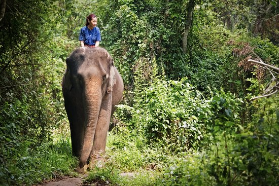 Four Seasons Tented Camp Golden Triangle: The best form of nature therapy, with Poon Larp (the elephant)