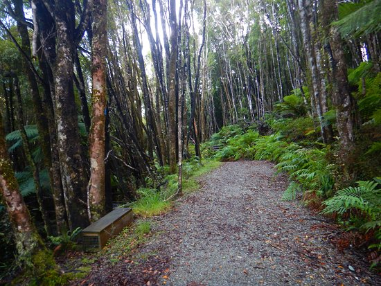 West Coast Region, New Zealand: Trail through forest