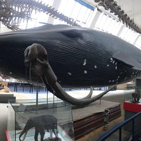 Μουσείο Φυσικής Ιστορίας Φωτογραφία