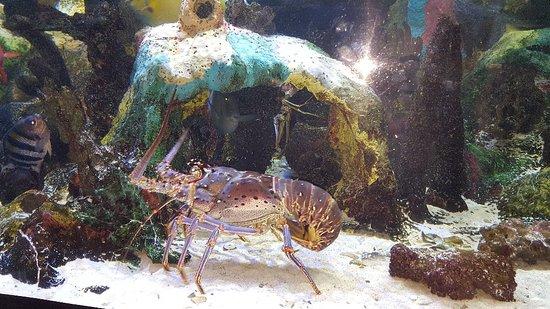 Mote Marine Laboratory and Aquarium : 20180512_183433_large.jpg
