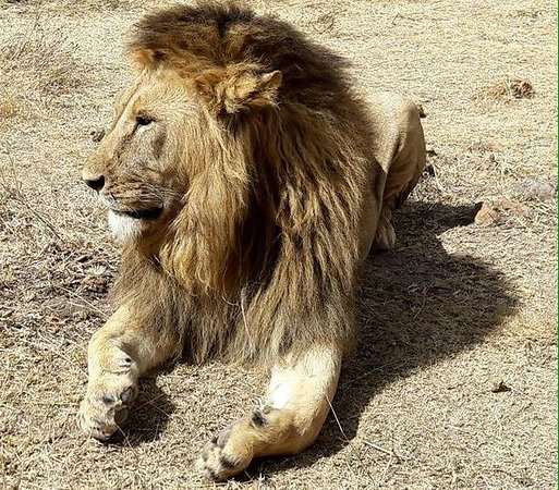 Safari in Kenya Con Samba: Ngorongoro National Park