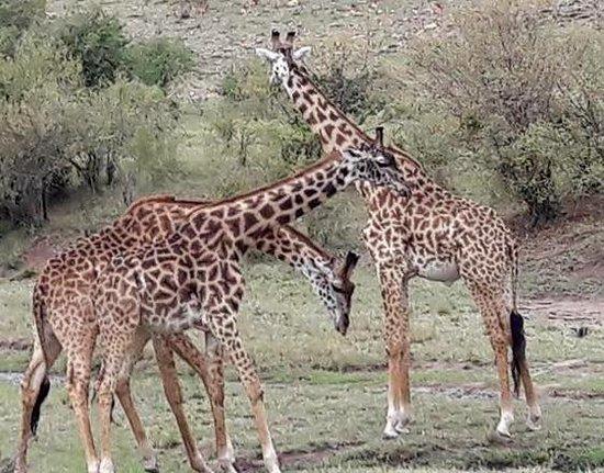Safari in Kenya Con Samba: Masai Mara