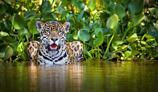 Manu Wildlife Peru