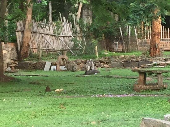 Jungle Hut ภาพถ่าย