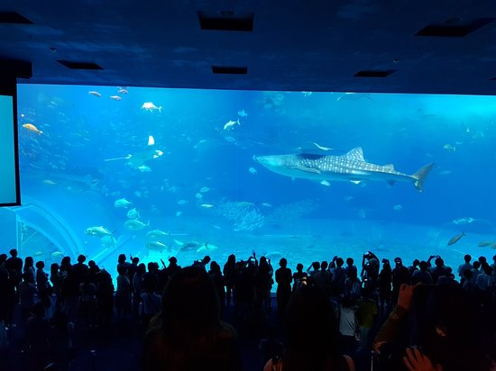 Okinawa Churaumi Aquarium: 20180508_155245_large.jpg