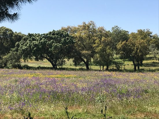Cork Trees And Spring Flowers Picture Of Portugal Trails Cascais