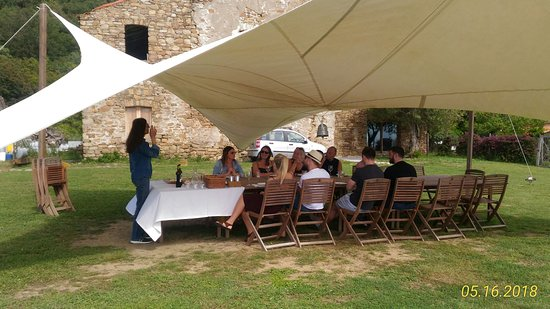 Tours & Transfers: Wine tasting Tour in Castellabate:The tasting