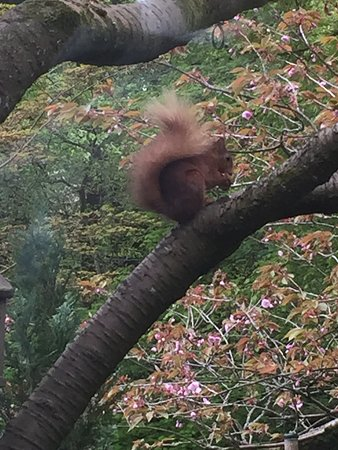 Torrdarach House: Red squirrel - not a great photo - it was too excited about everything in the garden to pose for a photo shoot