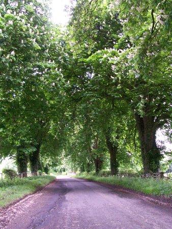 Burythorpe, UK: Surrounding area