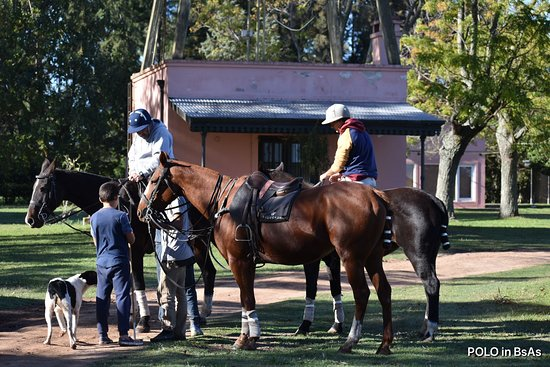Polo in Buenos Aires: Polo lessons