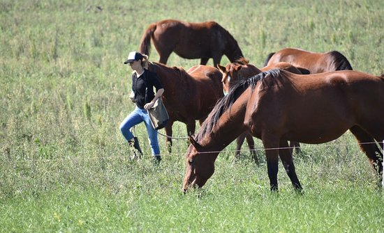 Polo in Buenos Aires: Tips for polo horses care & training POLO in BsAs