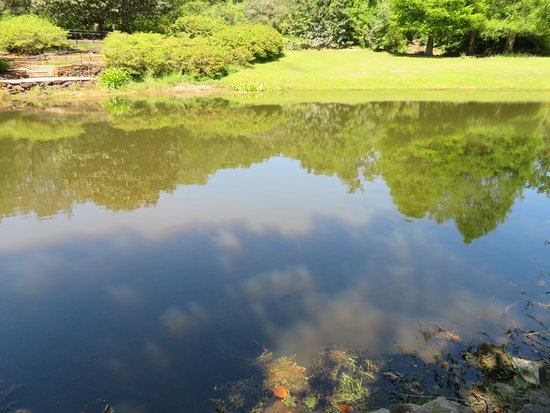 Bellingrath Gardens and Home: Reflection