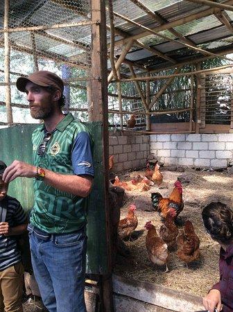 Tzununa, กัวเตมาลา: Explanation of deep-bedding chicken coop!
