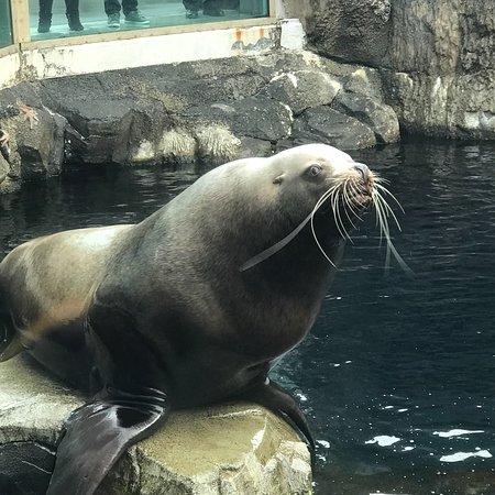 Alaska SeaLife Center Φωτογραφία