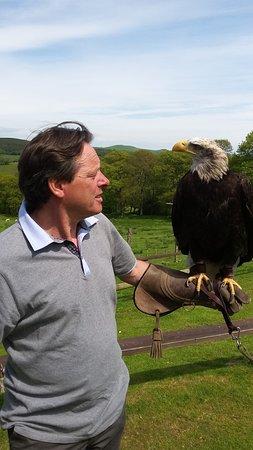 Machynlleth, UK: Ian & Lakoto - the wonderfully impressive bald eagle