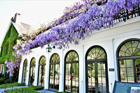 Kennett Square, PA: The Wisteria was blooming!