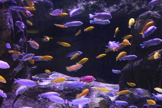 Litchfield Park, AZ: African cichlids...a wide variety of aquariums