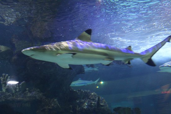 Litchfield Park, AZ: Shark encounter is fabulous