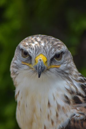 Millets Farm Falconry Centre: Eye contact!
