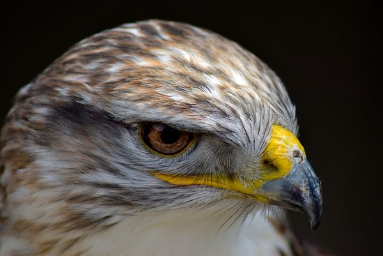 Millets Farm Falconry Centre: Portrait