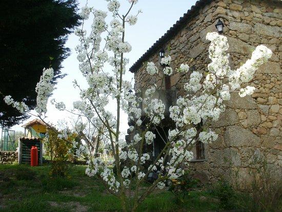 Quinta do Pinheiro: Pé de Cerejeira