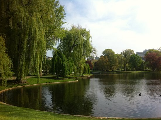 Boston Public Garden: The pond and willows