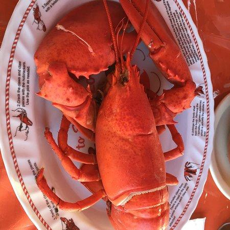 Amazing Lobster