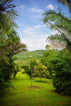Macaw Bank, Belize: View from the Harpie Eagle lodge