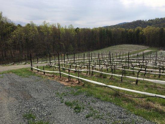 Dyke, VA: vines