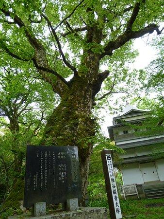 Shiiya Kannon Okeyaki