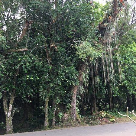 Curepipe Botanical Garden: photo5.jpg